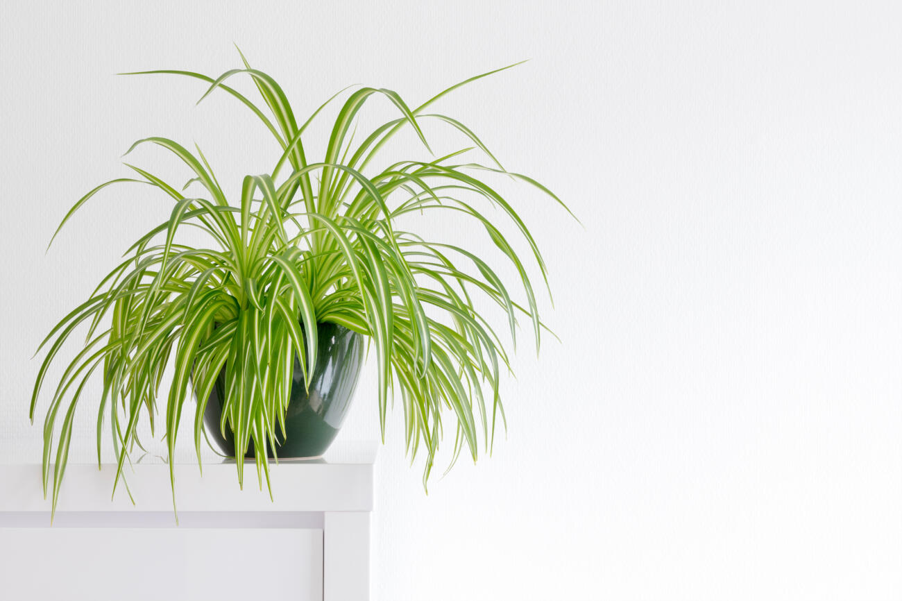 6 Air-Purifying Plants for your Home.